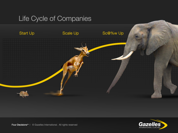 Life Cycle of Companies resized 600